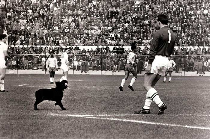 10.06.1962 Бразилия - Англия 3:1. England goalkeeper Ron Springett moves to eject a stray dog that had wandered on to the pitch during the 1962 World Cup quarter-final in Vina del Mar